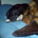 Snuggle with Ljúfur